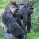 東山動物園の携帯での予約のやり方を6枚の写真で解説します!