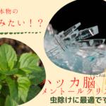 ハッカ脳(メントールクリスタル)虫除けの使い方。ゴキブリを0にする方法。蚊やダニにも効果。